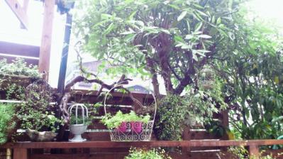 タヌキの園3