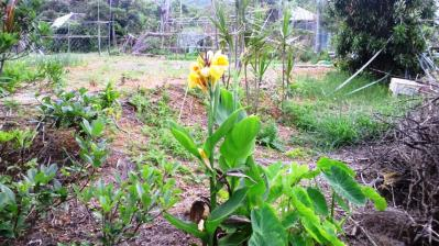 黄色に赤点の花1