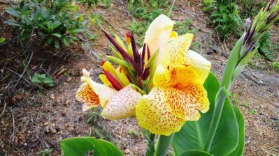 黄色に赤点の花2