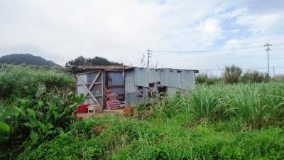 壊れた作業小屋1