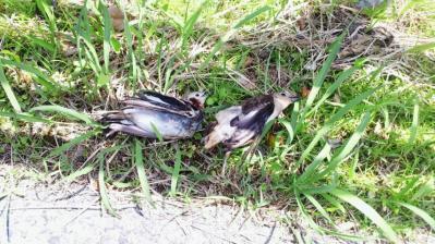 2011.4.28小鳥