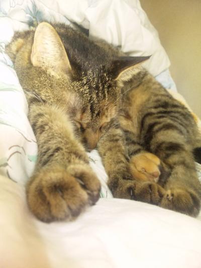 ちび:腕伸ばし睡眠