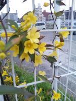 20100406香椎駅駐輪場の花