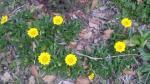 20100406香椎海岸の花黄