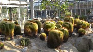 植物公園サボテン