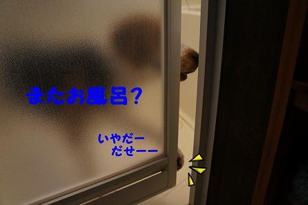 DSC06612_20140919230415f1d.jpg