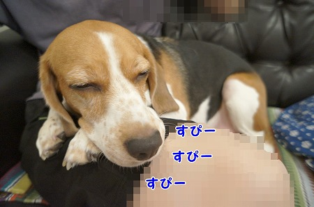 DSC09333.jpg