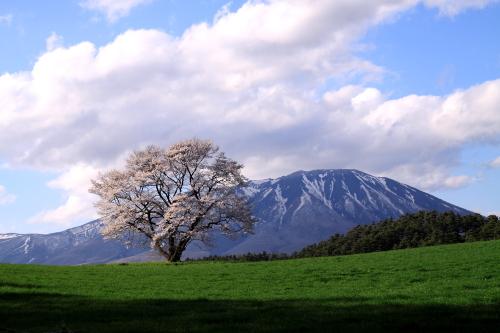 小岩井2010_④