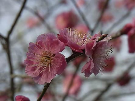 梅2010_02
