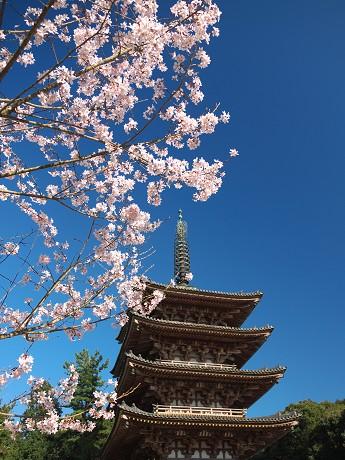 【五重塔と桜1】