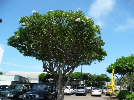2009 HAWAII 1114