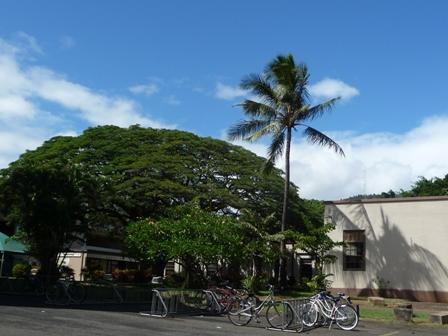 2009 HAWAII 1208