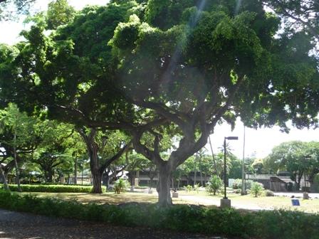 2009 HAWAII 1207