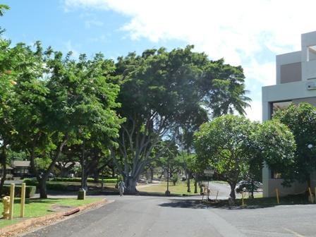 2009 HAWAII 1215