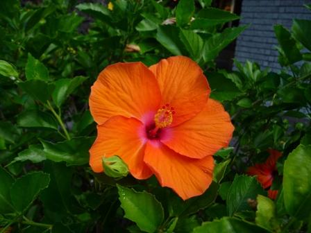 2009 HAWAII 1558