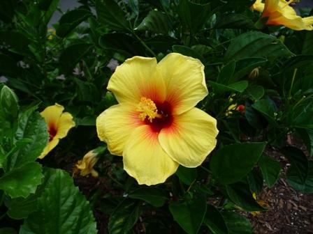 2009 HAWAII 1554