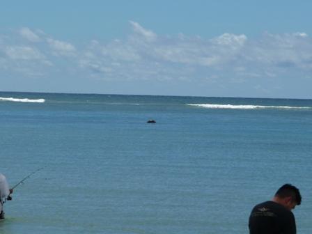 2009 HAWAII 1636