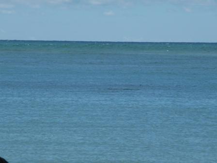 2009 HAWAII 1632