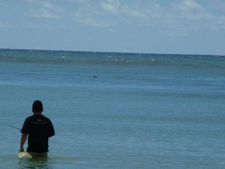 2009 HAWAII 1638
