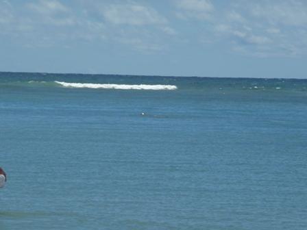 2009 HAWAII 1637
