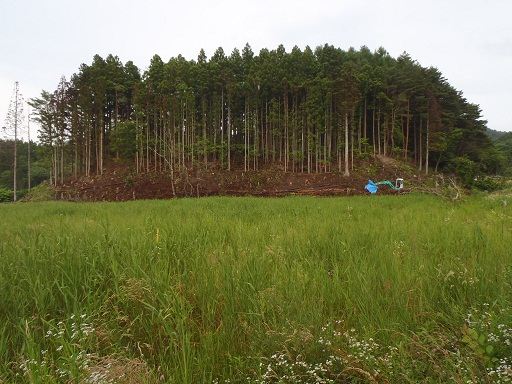 P7120031.jpg