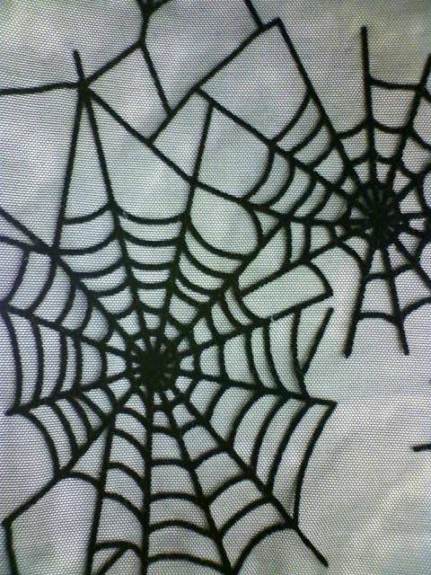 spider_net_d.jpg
