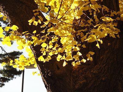 gaien201212f.jpg