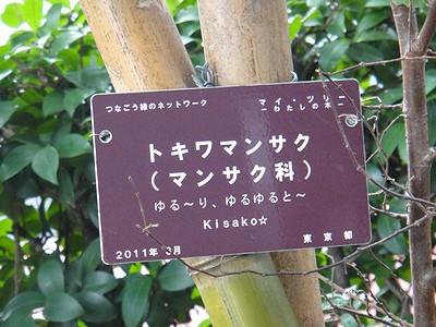 mytree201109a.jpg