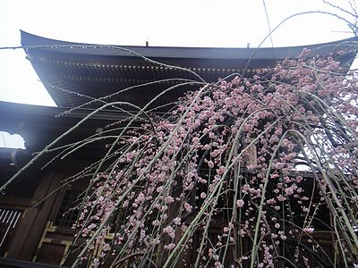 yuume201203b.jpg