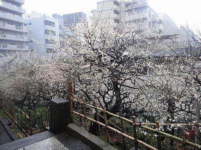 yuume201203c.jpg