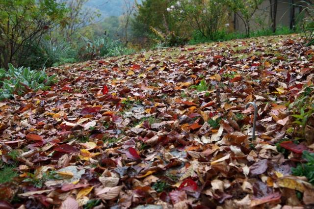 落ち葉の絨毯-1