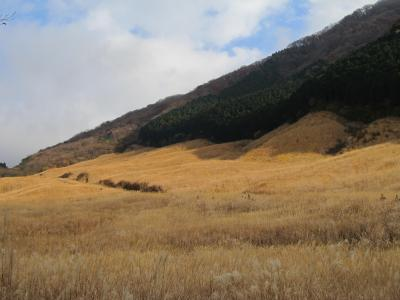 仙石原のすすき2