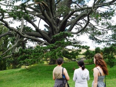 ホビット村パーティー会場の大木