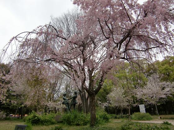 今更大阪城公園の桜2011-04