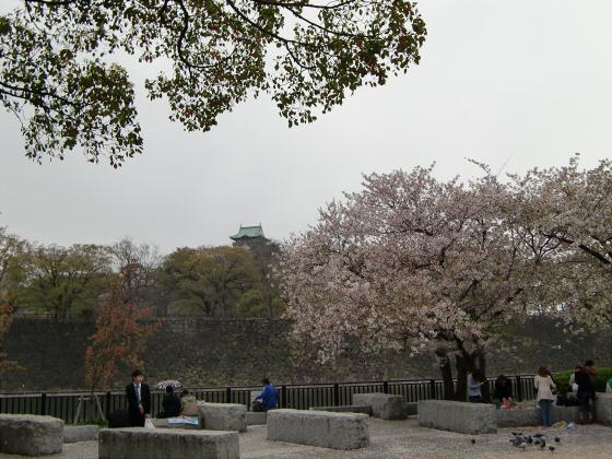 今更大阪城公園の桜2011-05