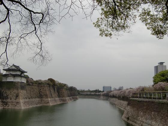 今更大阪城公園の桜2011-06