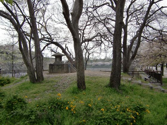 今更大阪城公園の桜2011-11