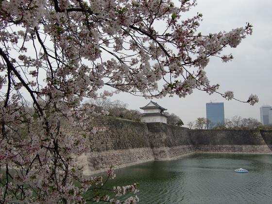 今更大阪城公園の桜2011-12