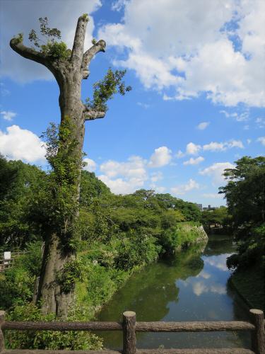 姫路城2014年9月-36