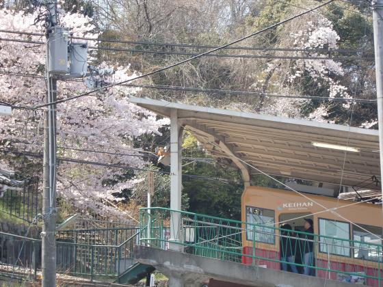 桜と共に電車色々02