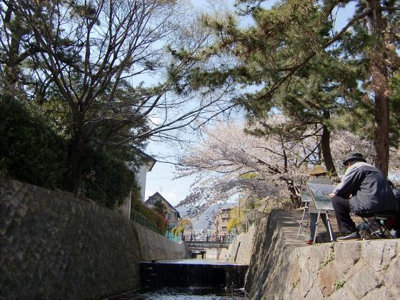 夙川公園の桜18