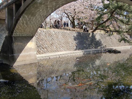 夙川公園の桜19