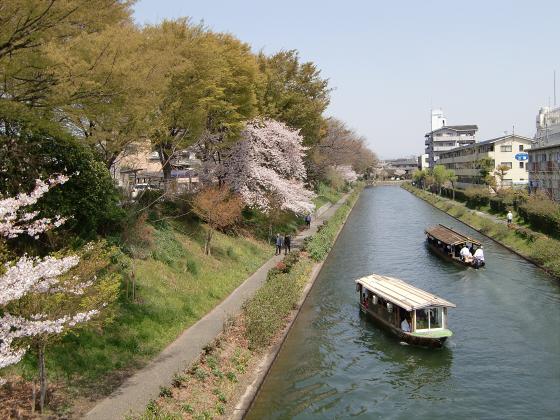 京阪中書島駅付近の桜01