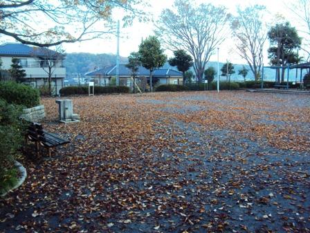 公園広場の落ち葉