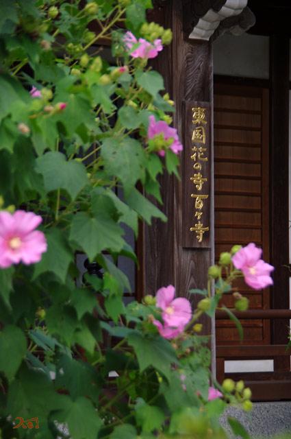 110912常楽寺10
