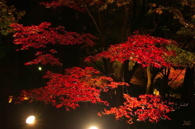 111027森林公園ライトアップ05