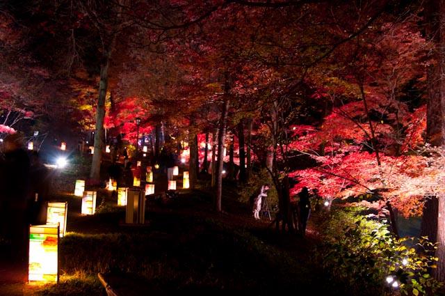 111027森林公園ライトアップ12