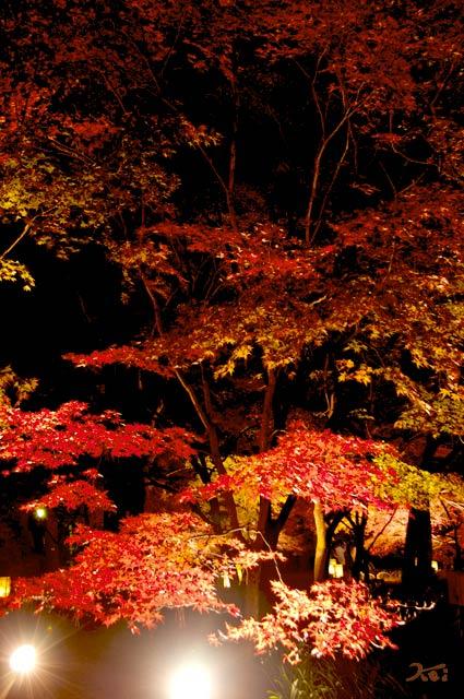 111027森林公園ライトアップ10