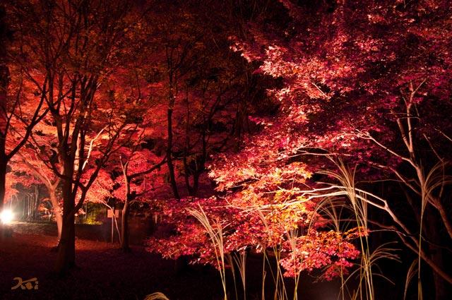 111027森林公園ライトアップ11
