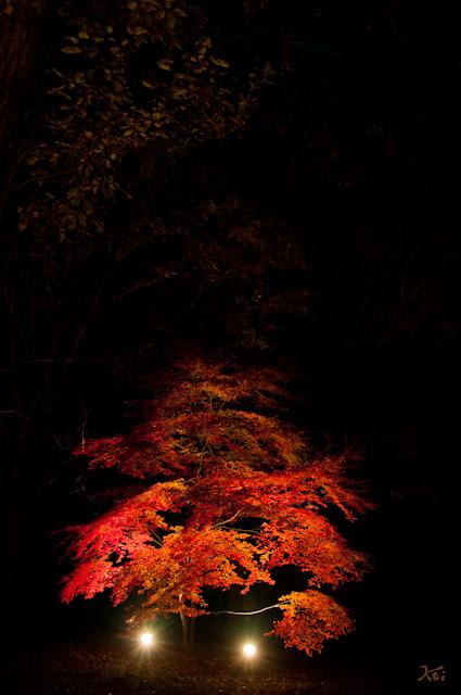 111027森林公園ライトアップ09